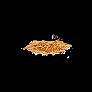 Jedlý hmyz